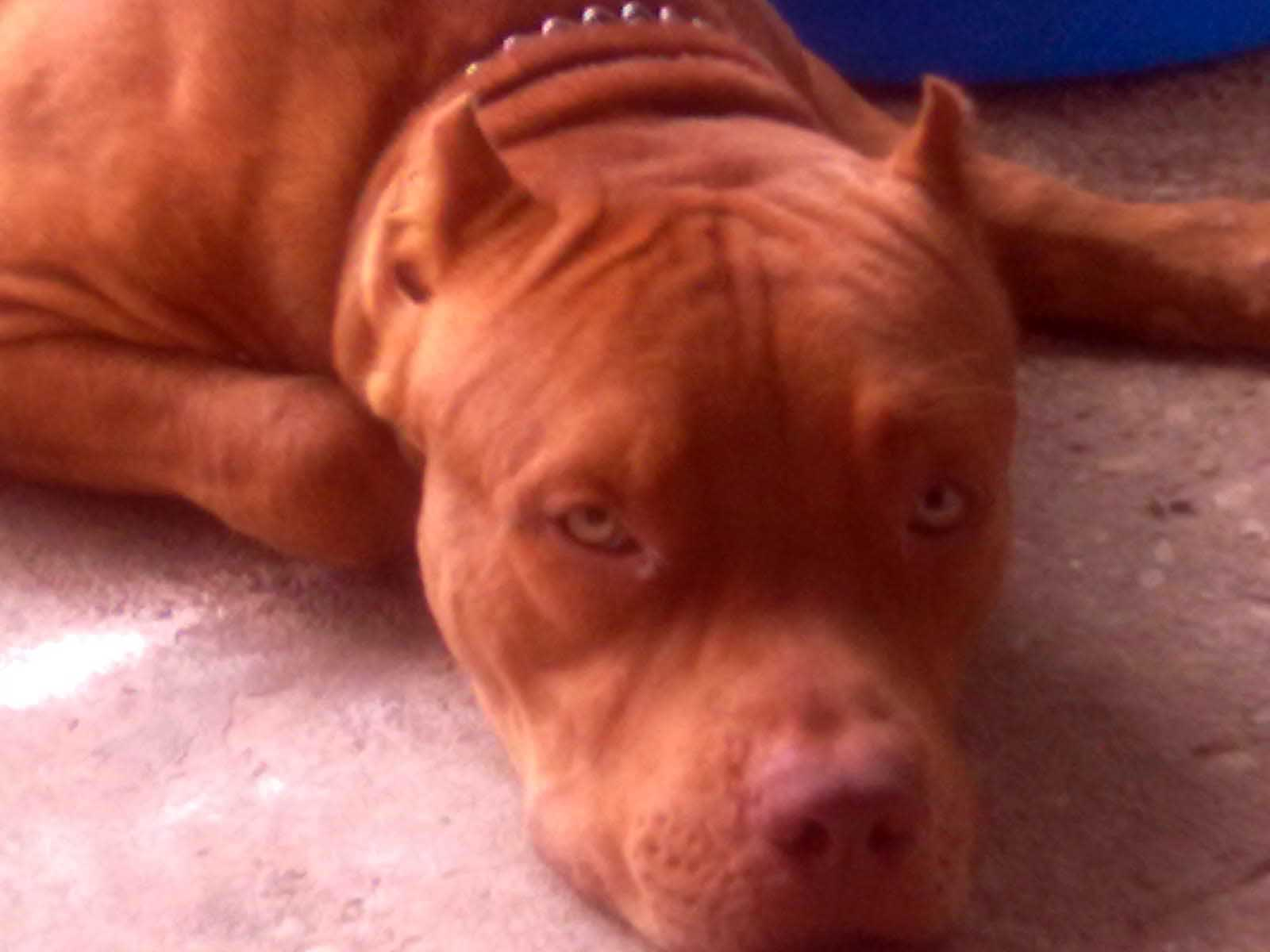 TRINI PETS 4 u  COM HOMEPAGE Buy and Sell Pets, Dogs, Puppys