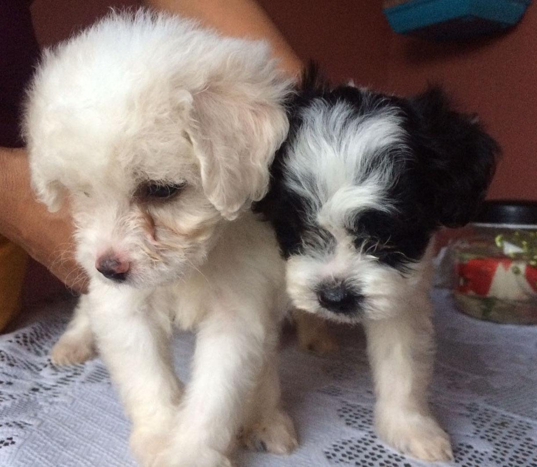 Trini Pets For Sale